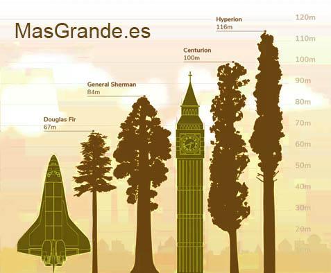 Árboles más grandes y altos del mundo
