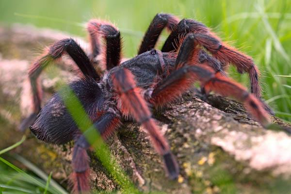 araña muy grande