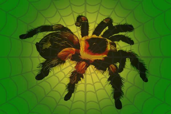 arañas mas grandes del mundo