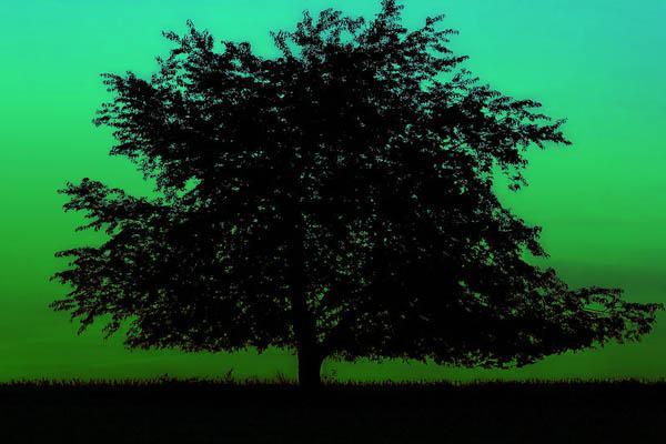 árboles más grandes del mundo