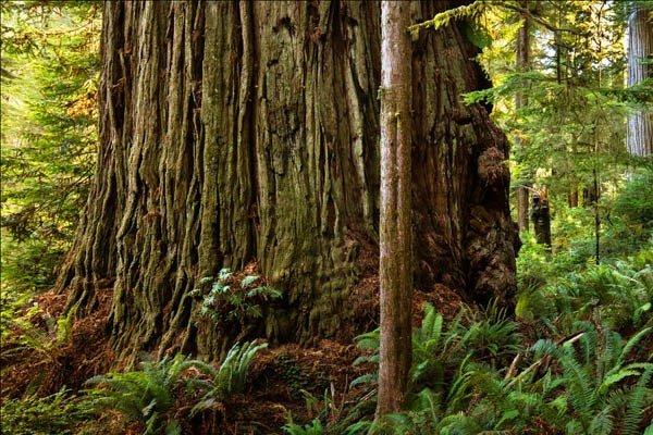 árboles más grandes