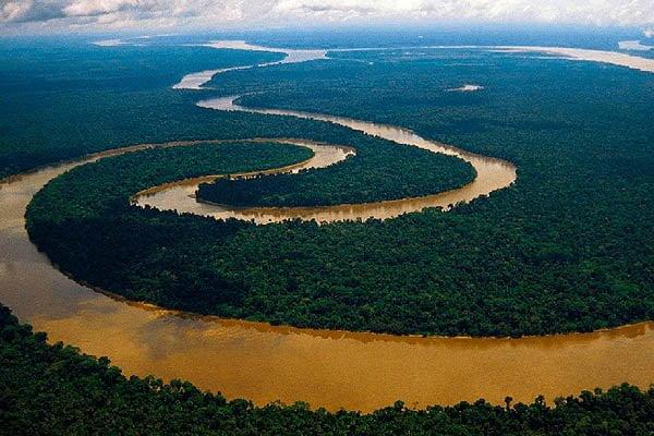 bosque mas grande del mundo