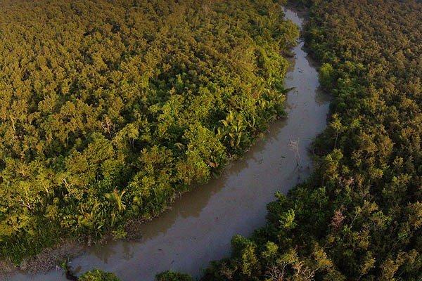 los bosques mas grandes del mundo