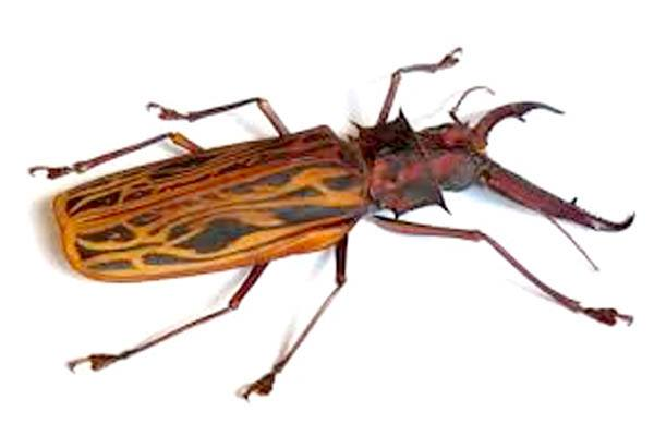insectos gigantes