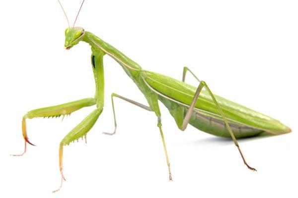 insectos más grandes del mundo