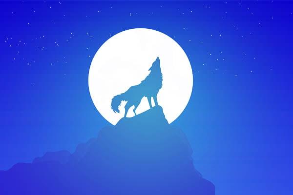 lobos mas grandes del mundo
