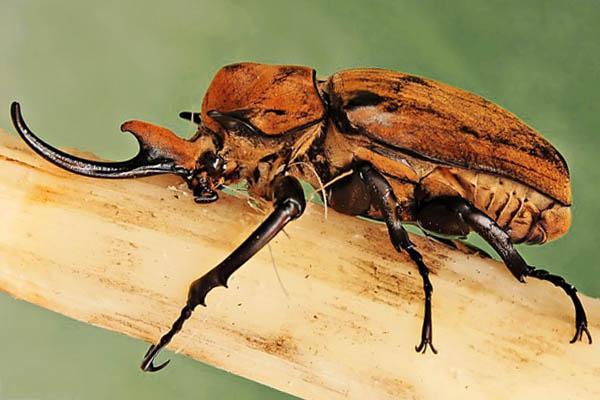 los insectos grandes