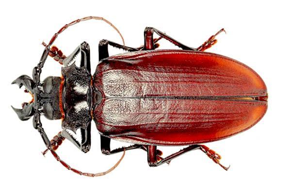 los insectos más grandes del mundo