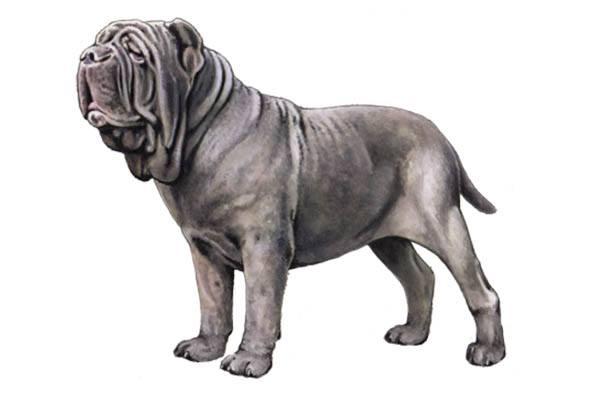 perro muy grande