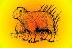 roedores mas grandes del mundo
