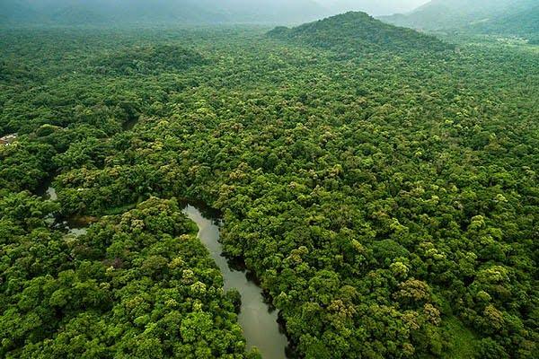 selva grande